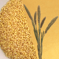 Additional Facts for Foxtail Millet