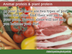 Animal protein & plant protein
