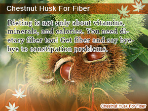 Chestnut Husk For Fiber