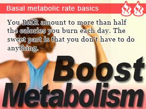 Basal metabolic rate basics