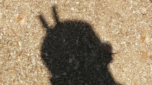 A shadow of a guy's head with two fingers sticking behind.
