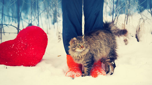 woman cat and heart in winter