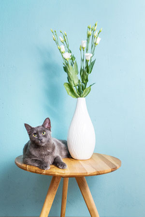 cat next to flower vase on round wooden table