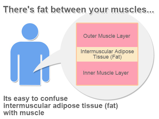There's fat between your muscle