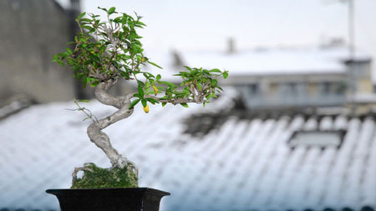 bonsai on roof