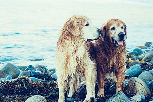 dog friends at beach