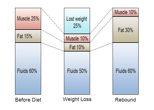 relation at muscles, fat and fluids
