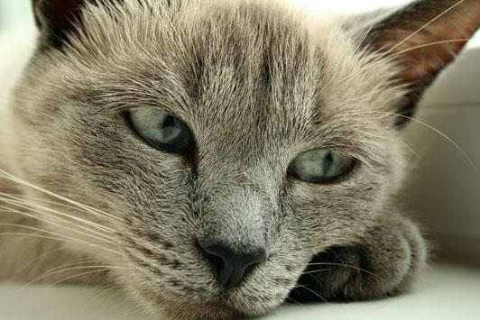 miserable cat