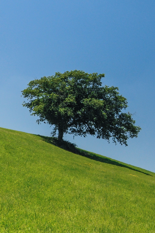 A tree on a hill.