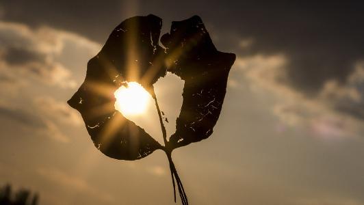 Leaf with a heart-shaped hole.