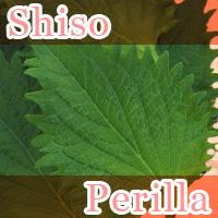 Shiso Perilla