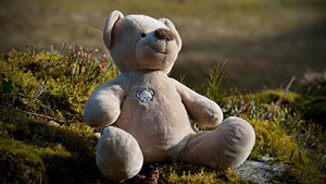 tundra teddy